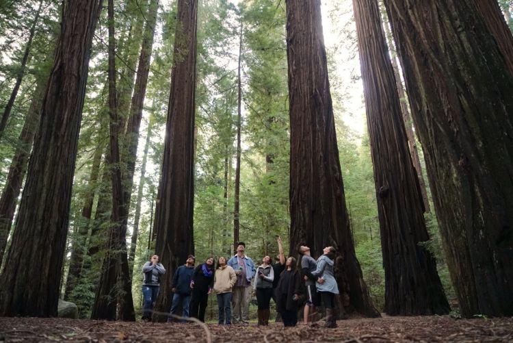 Autumn Aquarius Redwood Forest