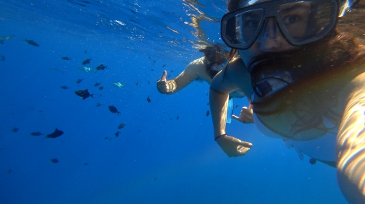 HunnyBunny Dive