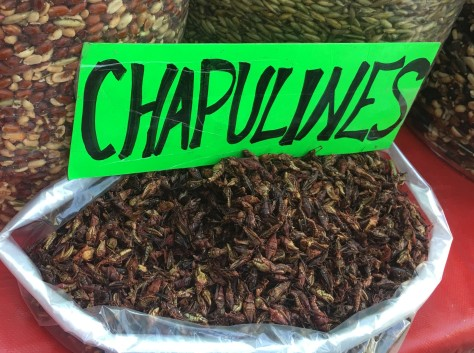 Autumn Aquarius Chapulines
